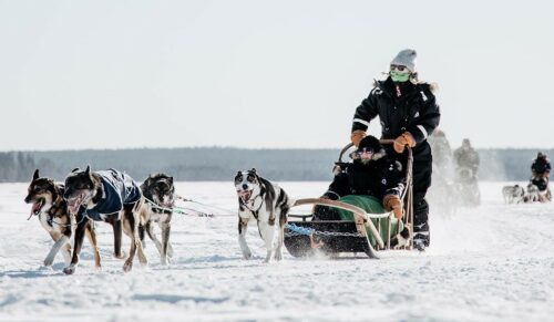 Bearhill Husky is the first company in Santa Claus Village to get the appreciated Sustainable Travel Finland- label.